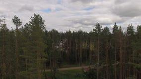 Panoramablick von Kiefern-Wald zu Wiesen-Tal hinten stock footage