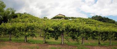 Panoramablick von Weinbergen in den Hügeln Stockfotos