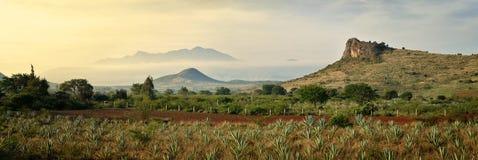 Panoramablicke der Agavenberge im Hintergrund Stockfotos