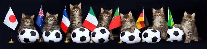Panoramacollage des Kätzchens mit Fußballkugeln Stockbild