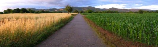 Panoramafeld Lizenzfreies Stockfoto