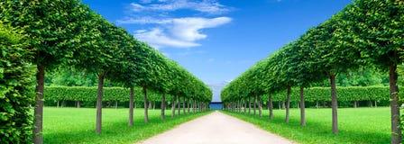 Panoramagränd i parkera Royaltyfri Foto