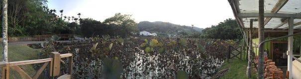 Panoramahoogtepunt van dode lotusbloem in hij meer royalty-vrije stock afbeelding