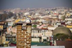 Panoramaic sikt av Istanbul royaltyfria foton