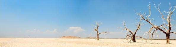 Panoramalandschaft der toten Bäume. Lizenzfreies Stockfoto