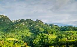 Panoramalandschaft Grüne Naturlandschaft der Asphaltstraße lizenzfreies stockbild