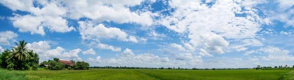 Panoramalandschaft Landschaftshäuser und üppiger grüner Feldreis lizenzfreie stockfotos