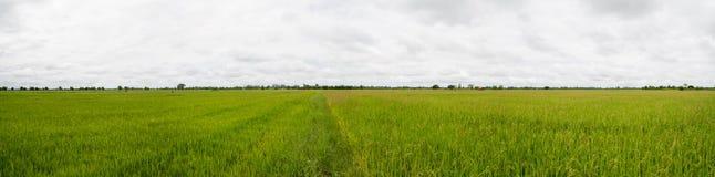 Panoramalandschaft Schöne erneuernde Wolke des blauen Himmels bewölkt Stockfotos