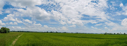 Panoramalandschaft Schöne Landschaft des Jasminreises lizenzfreies stockbild