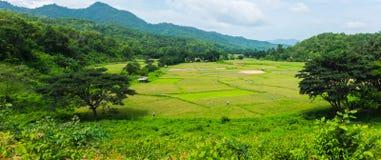 Panoramalandschap van het groene gebied van het rijstlandbouwbedrijf met berg in tha Royalty-vrije Stock Foto's