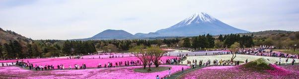 Panoramamening van de gebieden van de mosflox in shiba-Sakurafestival Stock Fotografie