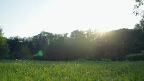 Panoramamening van een groen park in een zonnig weer stock footage