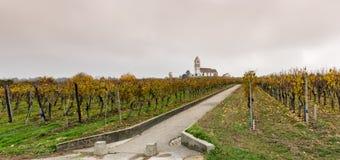 Panoramamening van een schilderachtige witte die kerk van het land door gouden de wijnstoklandschap van de wijngaardpinot noir wo stock foto's