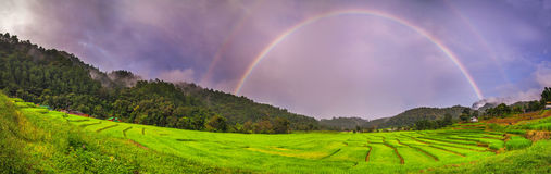 Panoramapadieveld over regenboog Stock Foto's