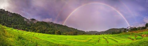 Panoramareisfeld über Regenbogen Stockfotos