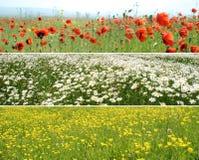 Panoramas de la flor Imagenes de archivo