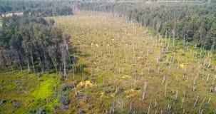 Panoramasatellietbeeld op bossatellietbeeld van bij de landweg in bosweergeven van de hommel in Taiga Antenne van het vliegen stock videobeelden