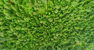 Panoramasatellietbeeld op bossatellietbeeld van bij de landweg in bosweergeven van de hommel in Taiga Antenne van het vliegen stock footage