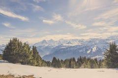 Panoramasikt av den schweiziska fjällängmountaien i vinter med skogen och blå himmel royaltyfri foto