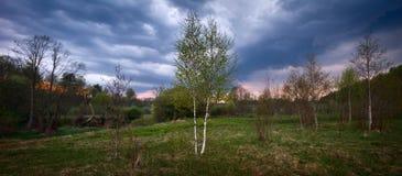 Panoramasommaräng och skog för en storm Arkivfoton
