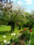 Panoramatic庭院在春天 免版税图库摄影