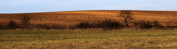Panoramatic picture. Panoramatic pisture of field and meadow Stock Photography
