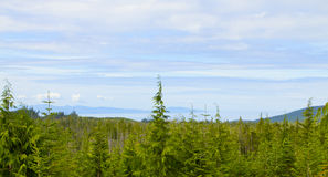Panoramaträn och himmel Royaltyfri Bild