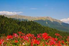 Panoramautsikt av Abetone i Tuscany royaltyfri bild