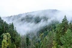 panoramautsikt av av berg i dimmig skog Arkivbilder