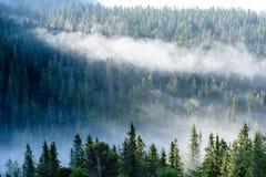 panoramautsikt av av berg i dimmig skog Royaltyfri Bild