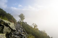 panoramautsikt av av berg i dimmig skog Royaltyfria Foton