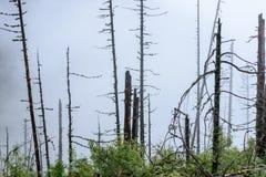 panoramautsikt av av berg i dimmig skog Fotografering för Bildbyråer