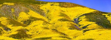 Panoramautsikt av berg som täckas i vildblommor, nationell monument för Carrizo slätt, centrala Kalifornien arkivbilder