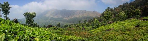 Panoramautsikt av de gröna frodiga tekullarna och bergen runt om Munnar, Kerala, Indien Fotografering för Bildbyråer