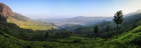 Panoramautsikt av den dimmiga Lockhart Tea Park och godset i ottan, Munnar, Kerala, Indien royaltyfria foton