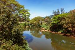 Panoramautsikt av den kungliga botaniska konungen Gardens, Peradeniya, Sri Lanka Gränd, sjö och flod arkivbild