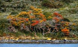 Panoramautsikt av den magiska f?rgrika sagaskogen p? Tierra del Fuego National Park, beaglekanal, Patagonia, Argentina royaltyfria bilder