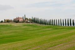 Panoramautsikt av det tuscan landskapet med gräsplanfält och rader av cypressträd, Tuscany, Italien fotografering för bildbyråer