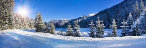 Panoramautsikt av dolda träd för snö Arkivbild