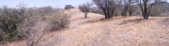 Panoramautsikt av en dal av Chile Arkivbild