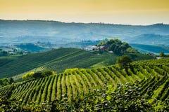 Panoramautsikt av en vingård i den Langhe regionen under höst Royaltyfri Bild