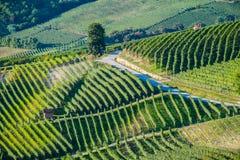 Panoramautsikt av en vingård i den Langhe regionen under höst Royaltyfri Fotografi