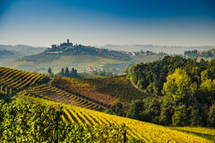 Panoramautsikt av en vingård i den Langhe regionen under höst Arkivfoto