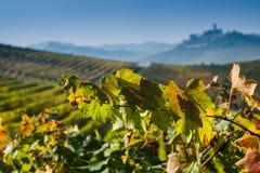 Panoramautsikt av en vingård i den Langhe regionen under höst Royaltyfria Foton