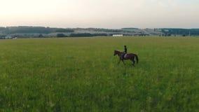 Panoramautsikt av ett fält med en kvinnlig ryttare som rider en hingst arkivfilmer