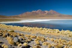 Panoramautsikt av Laguna de Canapa med flamingo, Bolivia - Altiplano arkivfoto