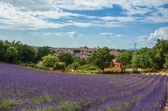 Panoramautsikt av lavendelfält och staden av Valensole royaltyfria bilder