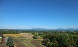 Panoramautsikt av patchworkfältet mot den blåa himlen royaltyfria bilder