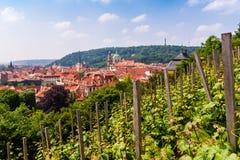 Panoramautsikt av Prague med helgonet Wenceslas Vineyard på slottlutning i förgrunden, Tjeckien arkivbild