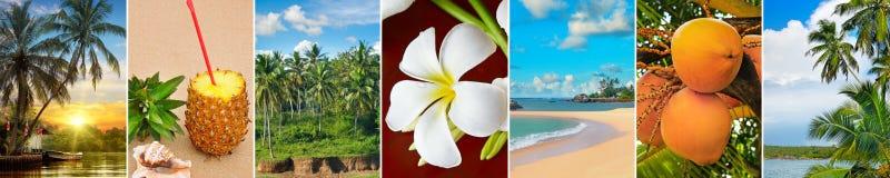 Panoramautsikt av tropiska stränder, palmträd och frukter wide royaltyfria bilder